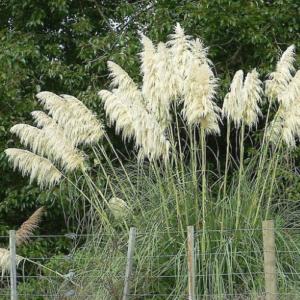 Tampa Grass